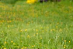 2013-05-04_um_08-01-14